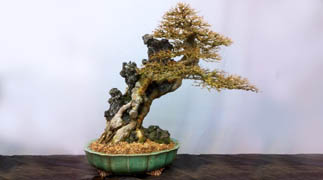photo de pot a bonsai